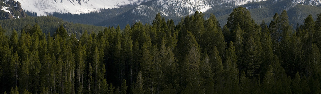 forest on mountains
