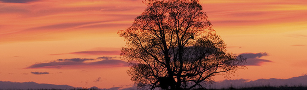 Tree at sunset 4.jpg