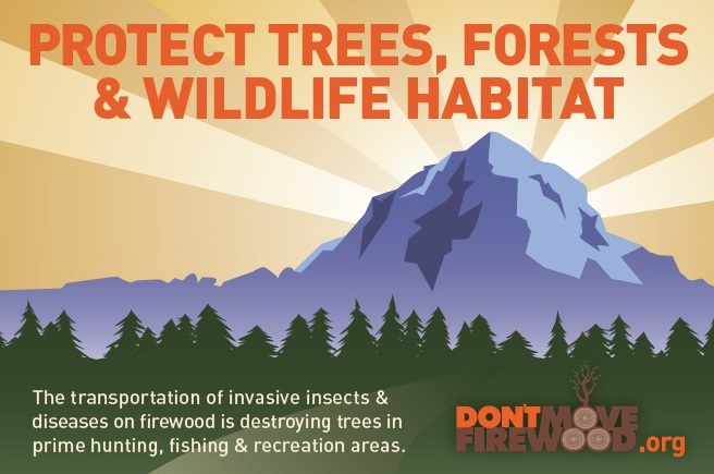 Protect trees, forests and wildlife habitat. Don't Move Firewood