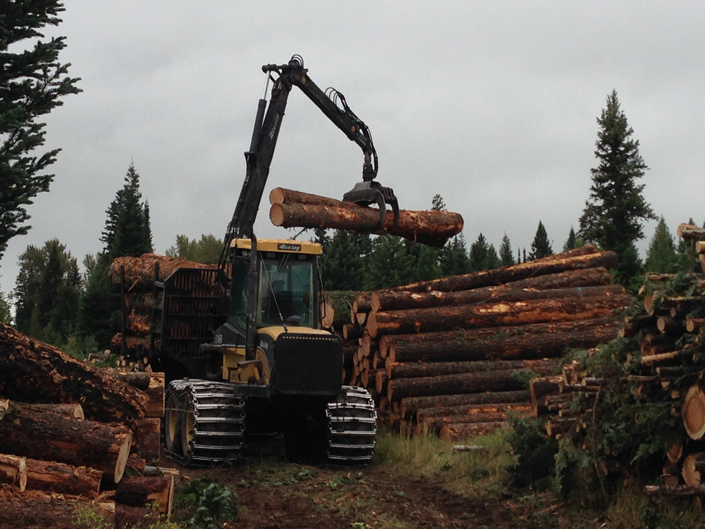 2015 Timber Sale Picture.jpg